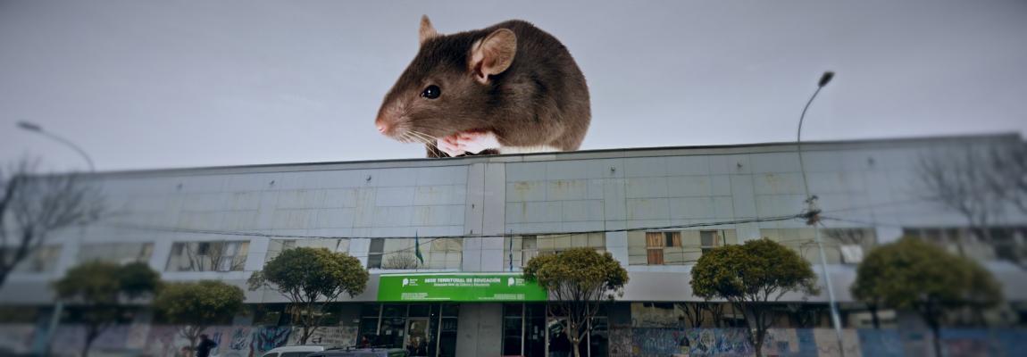 Llenos de ratas