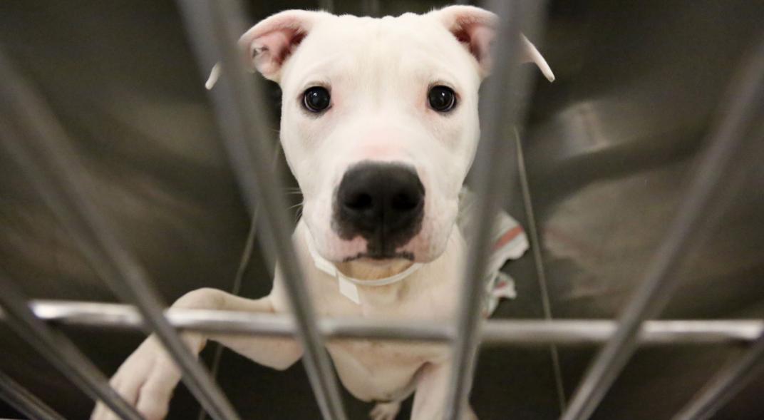 Prohíben la venta de perros y gatos en tiendas o veterinarias